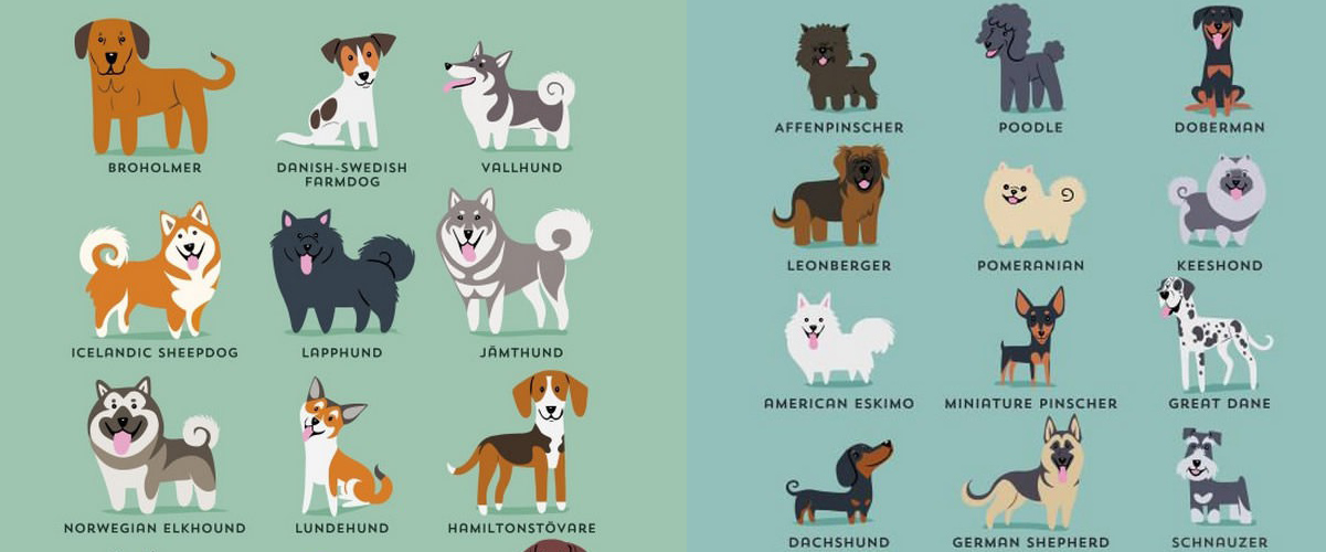 Koko maailman koirarodut – mistä maista ne tulevat