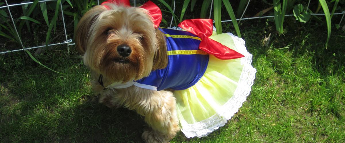 Saako koiraa pukea?