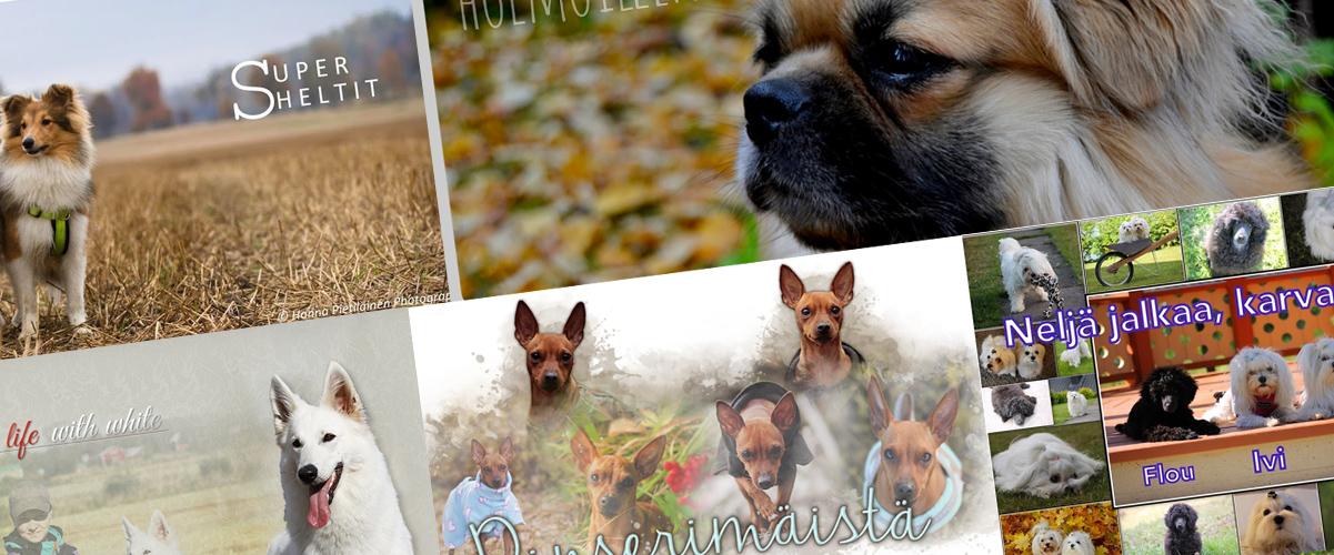 Mielenkiintoiset koirablogit
